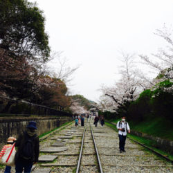(京都・蹴上|インクライン)廃線と桜